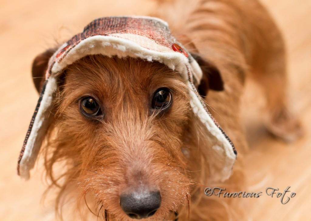 Murphy in his hunting cap