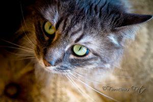 FurFotoWeb-8255.jpg
